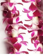 Fresh Hawaiian Leis in Bulk - 10 Leis