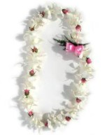 single white orchid and rose lei